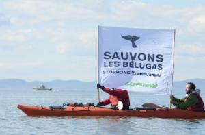 L'entreprise TransCanada pourra lancer ses travaux au large de Cacouna, dans l'estuaire du Saint-Laurent, afin de construire un terminal pétrolier.